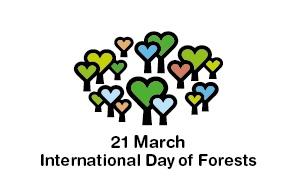 Mednarodni dan gozdov: Ali se zavedamo pomena gozdov?